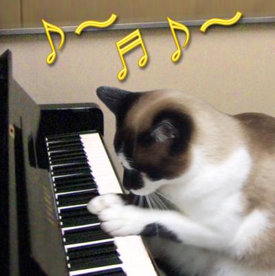 ピアノ猫.jpg